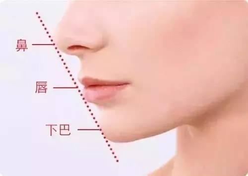 鼻唇下巴比例图