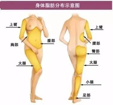上海美莱身体脂肪分布图